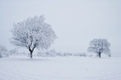 Winter Tree. Two trees in winter on a snowy field Stock Image
