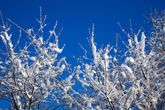 Winter tree. Trees full of snow on the middle of winter Stock Image