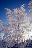 Winter tree. Trees full of snow on the middle of winter Stock Photos