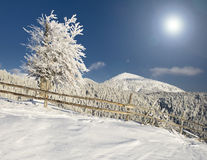Free Winter Tree Stock Image - 16444551
