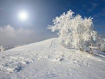 Free Winter Tree Royalty Free Stock Photos - 16444588