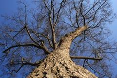 Winter Tree. In Bavaria, Germany Stock Photography