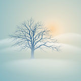 Winter tree. Illustration of a single tree in the misty winter morning Stock Photography