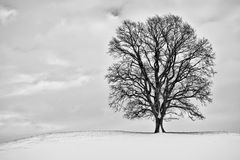Winter tree. A winter scenery with a tree in Bavaria Germany Stock Photography