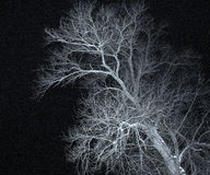 Winter tree Stock Image