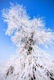 Winter tree Royalty Free Stock Photos