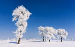 Winter tree Stock Photos