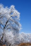 Winter tree. The tree in the frost on the background of blue sky Royalty Free Stock Photos