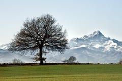 Free Winter Tree Stock Photos - 24011823