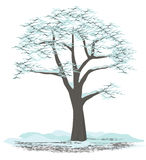 Winter tree. Tree covered with snow in winter Royalty Free Stock Image