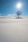 Winter tree. Tree in the winter in Allgäu, Germany Stock Photo