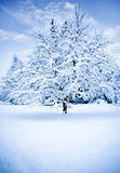 Winter tree. A winter tree and snow with copy space Royalty Free Stock Images