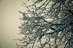 Winter tree. Branches of a winter tree covered by white snow Royalty Free Stock Photography