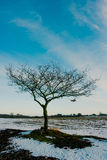 Winter tree. Lonesome winter tree surrounded by snow Stock Photos