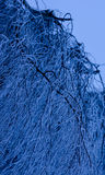 Winter tree. In the early hours of the morning Royalty Free Stock Images