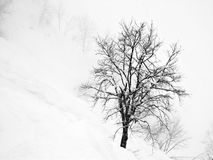 Winter tree. Lonely tree among a lot of snow Stock Photography