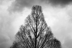 Winter tree. Silhouette of a bare tree against a winter sky royalty free stock image