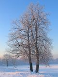 Winter tree. Winter, tree, snow, white, landscape, frost, one, plant, season, cold stock images