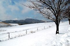 Winter Tree. Picture of winter scenery taken in the area of African Safari in Oita Prefecture, Japan stock photography