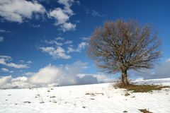 A winter tree. Image of a tree in field during winter Royalty Free Stock Photos