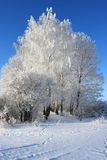 Winter tree. Cold winter snow forest tree frozen Stock Images