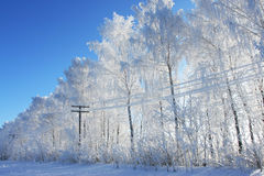 Winter tree. Cold winter snow forest tree frozen Stock Photo