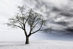 Winter Tree. Bare tree on barren snow landscape with storm clouds Stock Photos