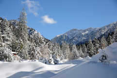 Winter tree. Winter in the forest in the mountains Royalty Free Stock Photo