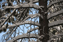 Winter tree. Winter in the forest in the mountains Royalty Free Stock Images