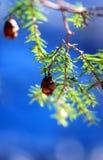 Winter Tree Stock Photography