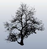 Winter Tree. Illustration of a tree silhouette in winter stock illustration