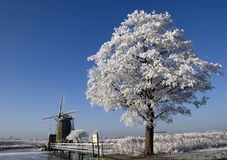 Winter tree. A photo of a tree with a blue sky and a windmill in the back stock images