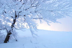 Winter tree. Tree with hoarfrost on snowy hill Stock Images