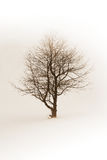 Winter tree Royalty Free Stock Photography