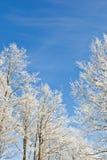 Winter tree against a blue sky Stock Photos