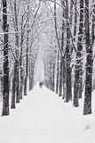 Winter tree alley Royalty Free Stock Photography