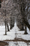 Winter tree alley Stock Photography