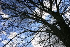 Winter Tree Background. Silhouette of winter tree against blue cloudy sky background Stock Photo