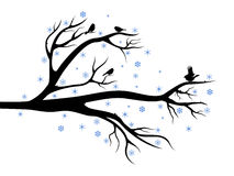 Winter tree with birds Royalty Free Stock Photography