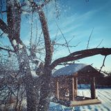 Winter tree for birds village sun snow cold new year royalty free stock photo