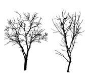 Winter tree black silhouettes. Two winter tree black silhouettes Royalty Free Stock Photos