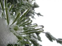 Winter, Tree, Branch, Bough, Ice Royalty Free Stock Image