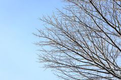 Winter tree branch Stock Image
