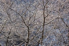 Winter tree branches Stock Image