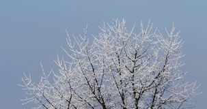 Winter Tree Branches Against Blue Sky stock video footage