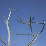 Winter tree Stock Image
