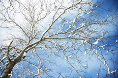 Winter tree branches covered with snow Stock Photography