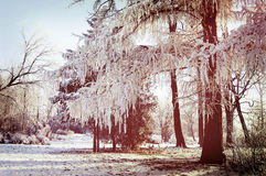 Winter tree branches covered with snow Stock Images
