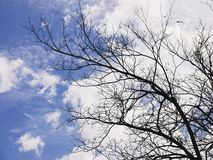 Winter Tree Branches leaftless tree against cloudy blue sky royalty free stock image