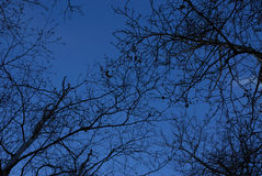 Winter tree branches at night Royalty Free Stock Photography